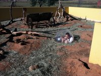 Mike in a bubble